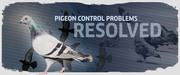 Cost Effective Solutions for Pigeon Control in Manchester